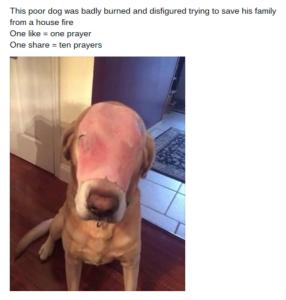 Pies z szynką na twarzy